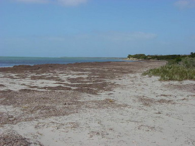 Cape Gantheaume Conservation Park