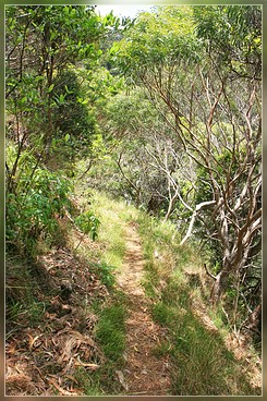Ditch Trail, Koke'e SP, Kaua'i